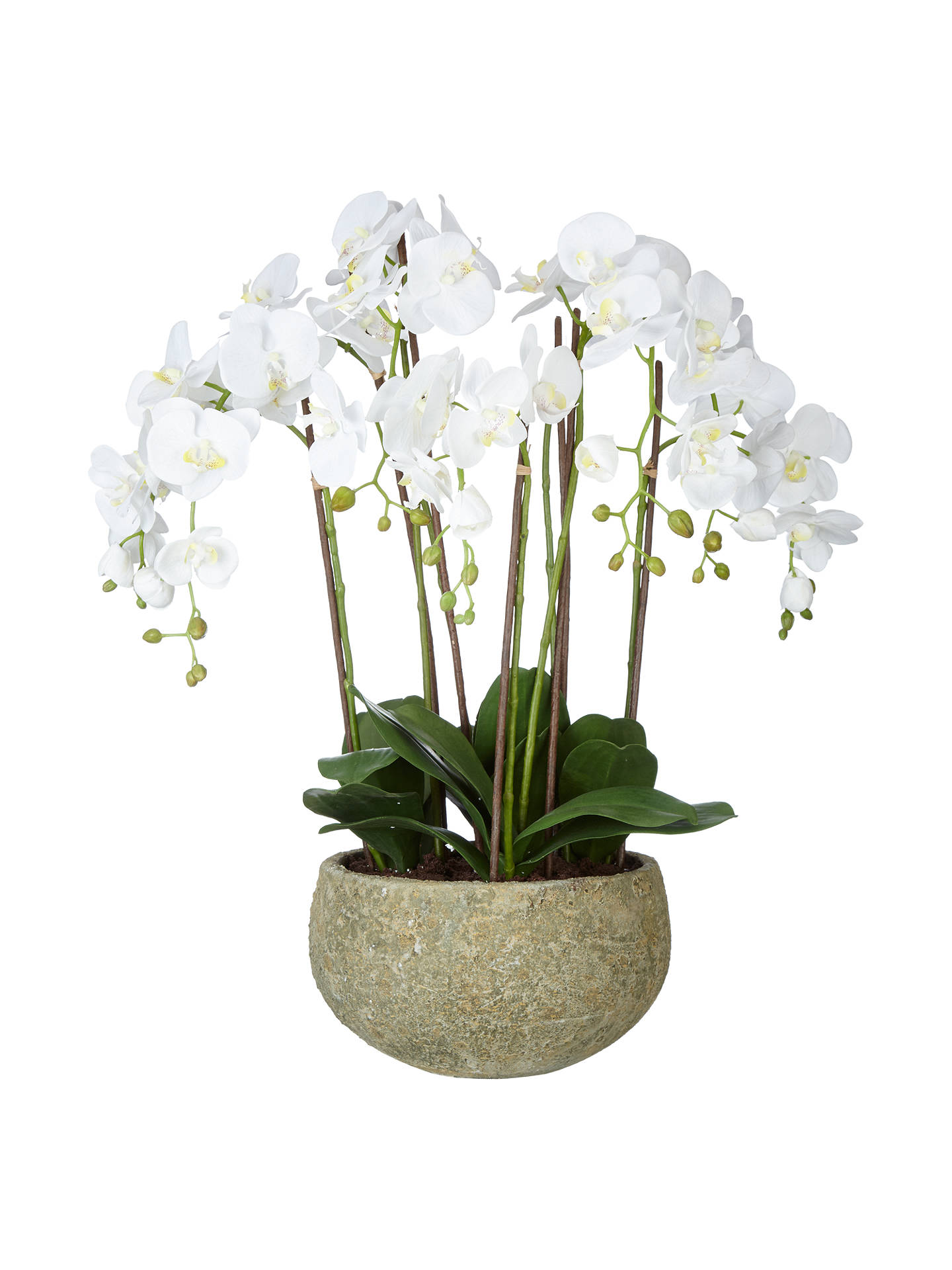 BuyJohn Lewis & Partners Fusion White Artificial Orchid in Clay Pot, 75cm Online at johnlewis.com