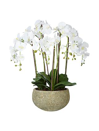 John Lewis & Partners Fusion White Artificial Orchid in Clay Pot, 75cm