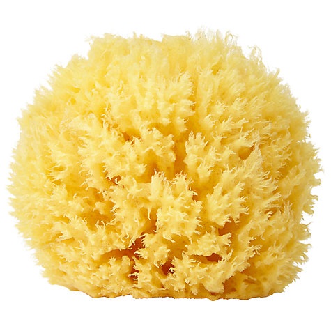 Buy Natural Sea Sponge Online at johnlewis.com