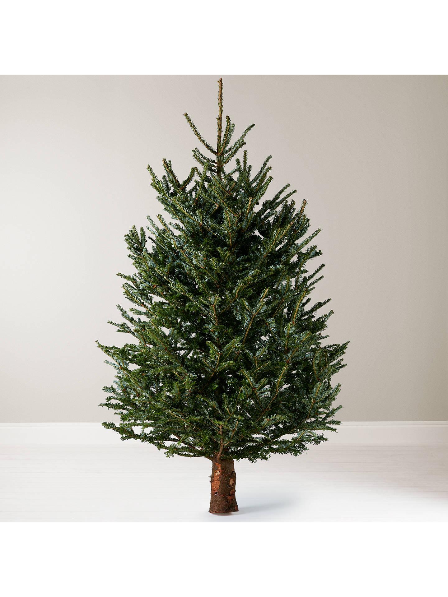 Fraser Fir Christmas Trees.John Lewis Real 6ft Fraser Fir Christmas Tree No Stand At