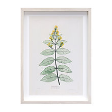Buy V&A Primulaceae Vert Framed Print, 48 x 36cm Online at johnlewis.com