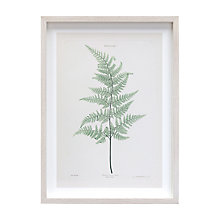 Buy V&A - Bree's Fern Framed Print, 48 x 36cm Online at johnlewis.com