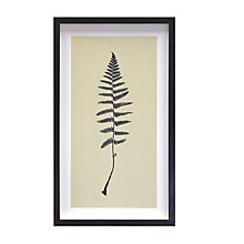 Buy Deborah Schenck - Fingles Fern Framed Print, 48 x 28cm Online at johnlewis.com
