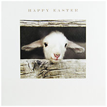 Buy Susan O'Hanlon Lamb Peeping Easter Greeting Card Online at johnlewis.com