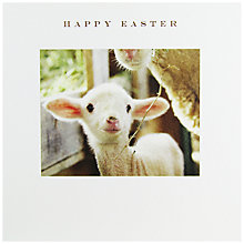 Buy Susan O'Hanlon Cute Lamb Easter Greeting Card Online at johnlewis.com