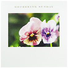 Buy Susan O'Hanlon Pink Pansies Mother's Day Card Online at johnlewis.com