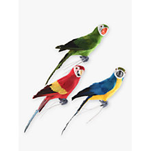 Buy John Lewis Assorted Parrot, Multi Online at johnlewis.com
