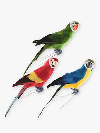 John Lewis & Partners Parrot, Assorted