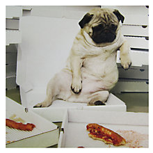 Buy Paper Rose Pizza Pug Greeting Card Online at johnlewis.com