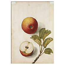 Buy V&A - Apples Unframed Print, 30 x 40cm Online at johnlewis.com