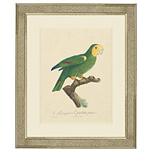 Buy Deborah Schenck - Tropical Bird III Framed Print, 60 x 50cm Online at johnlewis.com