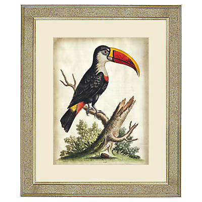 George Edwards – Toucan Framed Print, 60 x 50cm