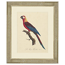 Buy Deborah Schenck - Tropical Bird II Framed Print, 60 x 50cm Online at johnlewis.com
