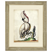 Buy Deborah Schenck White Cockatoo III Framed Print, 60 x 50cm Online at johnlewis.com