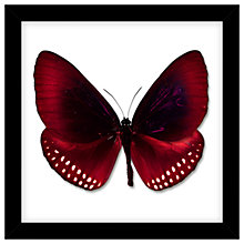 Buy John Lewis Butterfly Paper Cut Framed Print, 32 x 32cm Online at johnlewis.com