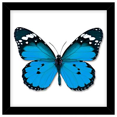 John Lewis Butterfly Paper Cut Framed Print, 32 x 32cm
