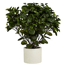 Buy Artificial Peperomia Topiary Plant with Pot, H43cm Online at johnlewis.com