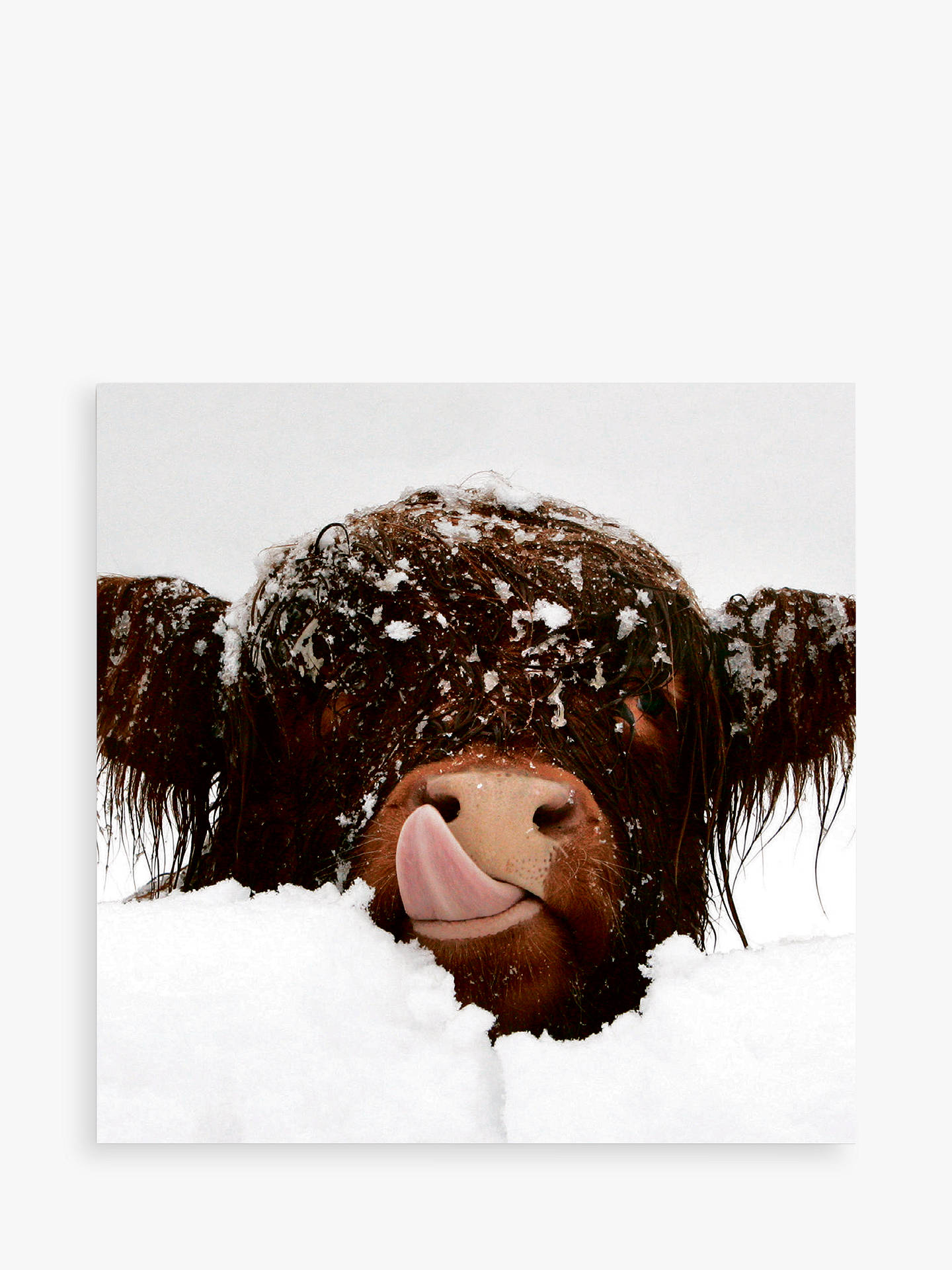 Darkroom Snow Cow and Donkey Christmas Cards, Pack of 16 at John ...