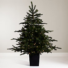 Buy John Lewis Isla Emerald Pre-Lit Potted Christmas Tree, 4.5ft Online at johnlewis.com