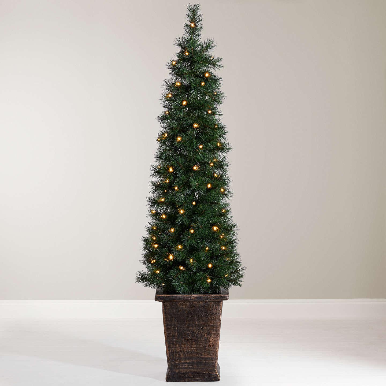 pot grown christmas trees for sale