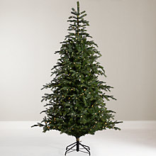 Buy John Lewis Isla Emerald Pre-Lit Christmas Tree, 7ft Online at johnlewis.com