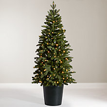 Buy John Lewis Bala Pre-Lit Potted Fir Christmas Tree, 5.5ft Online at johnlewis.com