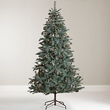 Buy John Lewis Highland Pine Christmas Tree, 7ft + John Lewis 320 LED Christmas Lights, Pure White, 26m, Copper Wire Online at johnlewis.com