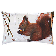 Buy John Lewis Red Squirrel Cushion, Multi Online at johnlewis.com