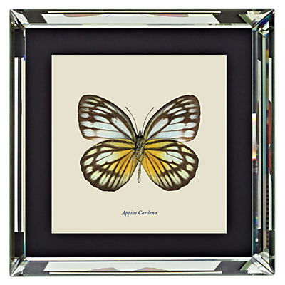 Brookpace, Entomology Collection – Appias Cardena Framed Print, 46 x 46cm
