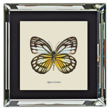Buy Brookpace, Entomology Collection - Appias Cardena Framed Print, 46 x 46cm Online at johnlewis.com