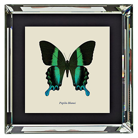 Buy Brookpace, Entomology Collection - Papilio Blumei Framed Print, 46 x 46cm Online at johnlewis.com