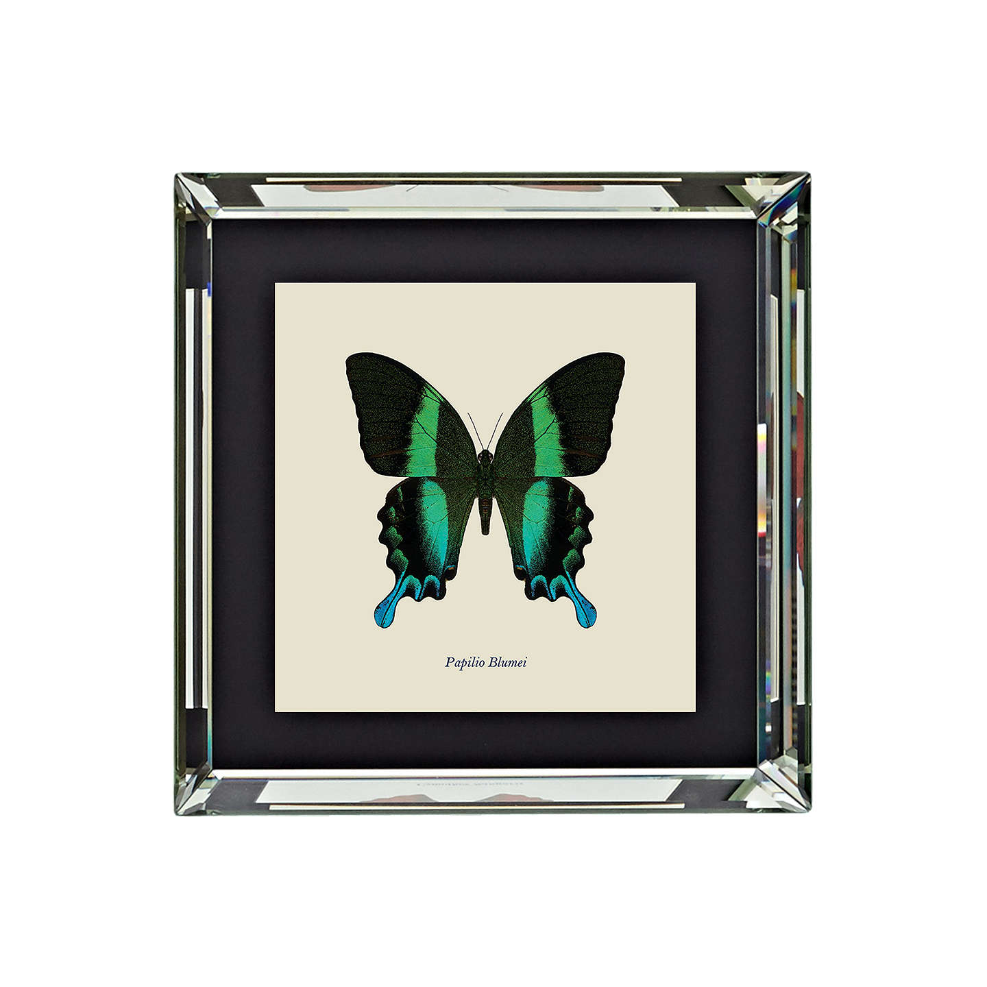 BuyBrookpace, Entomology Collection - Papilio Blumei Framed Print, 46 x 46cm Online at johnlewis.com