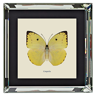 Brookpace, Entomology Collection – Catopsilia Framed Print, 46 x 46cm