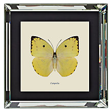 Buy Brookpace, Entomology Collection - Catopsilia Framed Print, 46 x 46cm Online at johnlewis.com