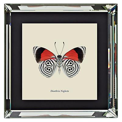 Brookpace, Entomology Collection – Diaethria Neglecta Framed Print, 46 x 46cm