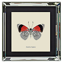 Buy Brookpace, Entomology Collection - Diaethria Neglecta Framed Print, 56 x 56cm Online at johnlewis.com