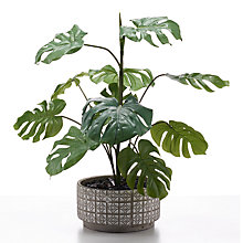 Buy Peony Artificial Cheese Plant in Grey and White Pot Online at johnlewis.com