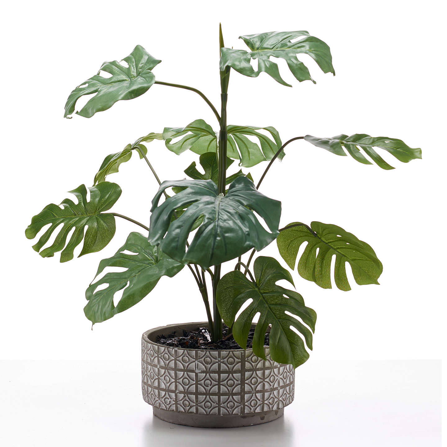 Buypeony Artificial Cheese Plant In Grey And White Pot Online