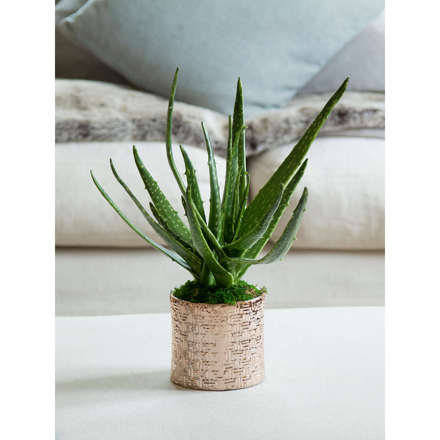 BuyPeony Artificial Aloe in Copper Pot Online at johnlewis.com