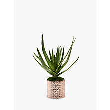 Buy Peony Artificial Aloe in Copper Pot Online at johnlewis.com