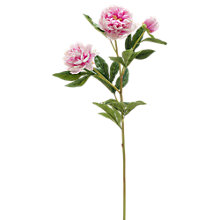 Buy Peony Artificial Single Stem Online at johnlewis.com