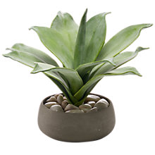 Buy Peony Artificial Scandi Aloe Plant In Ceramic Pot Online at johnlewis.com
