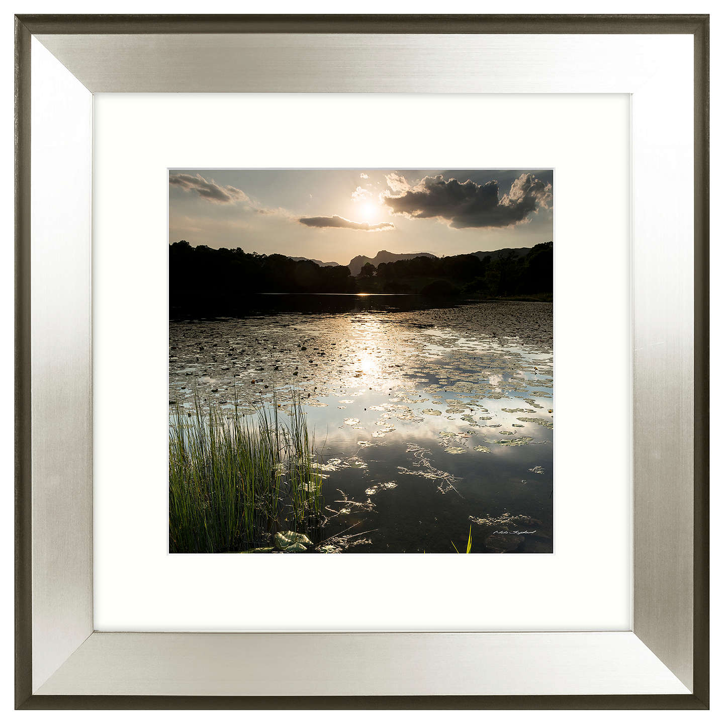BuyMike Shepherd - Lakeland Lillies 1 Framed Print, 51 x 51cm Online at johnlewis.com