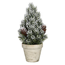 Buy John Lewis Snowy Mini Potted Christmas Tree Online at johnlewis.com