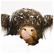 Buy Almanac Snow Cow Charity Christmas Cards, Pack of 8 Online at johnlewis.com