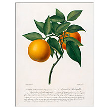 Buy RHS - Citrus Aurantium Unframed Print, 30 x 40cm Online at johnlewis.com