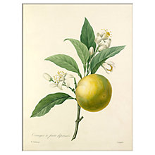 Buy RHS - Oranger À Fruits Déprimé Unframed Print, 30 x 40cm Online at johnlewis.com