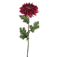 Buy Peony Artificial Chrysanthemum, Set of 6 Online at johnlewis.com