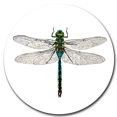 Gadd & Co Dragonfly Placemat, Glass, Dia.30cm