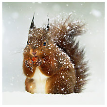 Buy Ling Designs Red Squirrel Christmas Card Online at johnlewis.com